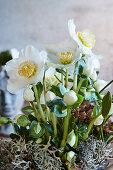 Arrangement of hellebore and lichen