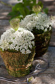 Arrangements of Queen Anne's lace and moss in baskets
