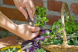 Wreath with green cherries: tie unripe cherries, salvia flowers and oregano alternately onto a wire ring