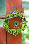 Wreath with green cherries: unripe cherries, salvia flowers and oregano