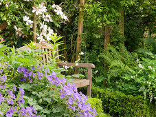 A cozy seat between the cranesbill, clematis, and fern
