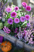 Aster, sphagnum myrtle and budding heather in a wooden box