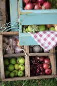 Wooden box with onions, green apples, and garlic