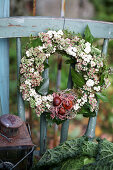 Autumn wreath made of ivy, sedum, and snowberries with tulip bulbs