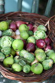 Harvest in a basket: green apples, red onions and Brussels sprouts