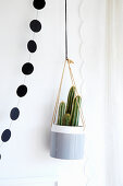 Potted column cactus in suspended pot