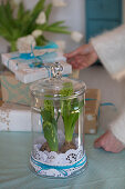 Hyacinths with cake toppers in a glass jar with a lid