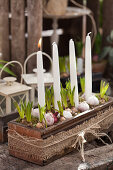 Hyacinths and Advent candles in an old sewing-machine-table drawer