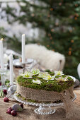 A DIY moss cake with hellebore flowers