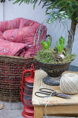 Hyacinths in vintage metal container with chicken wire