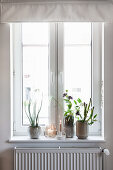 Houseplants, vases and candles on windowsill