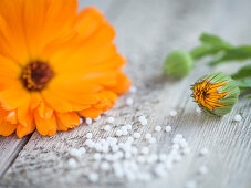 A marigold on a wooden surface