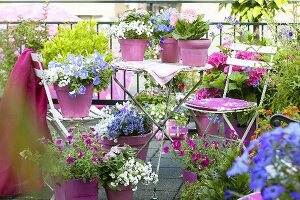 Summery balcony with flowering plants in pots and sunshade
