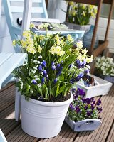 Spring flowers in pots on a balcony