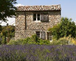 Lavendelfeld vor kleines Steinhaus in der Provence
