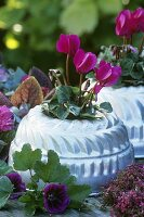 Autumn decoration: cyclamen in gugelhupf mould