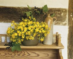 Flowering St. John's wort and blackcurrants