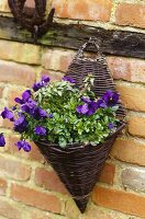 Wooden hanging basket with purple flowers and greenery