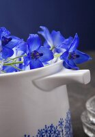 Delphiniums lying on a white jug
