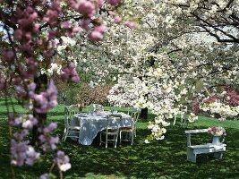 Gedeckter Tisch unter blühenden Bäumen im Garten
