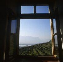 Blick auf Castel Ringberg, Weingut Elena Walch, Südtirol
