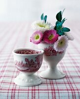 Daisies in a red-and-white porcelain egg cup