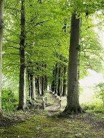 A tree-lined avenue with a little wooden bridge, Osnabrücker Land, Gut Sögeln