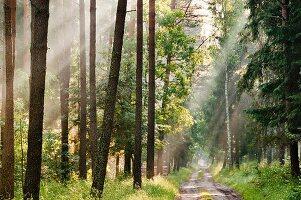 Morgendlicher Wald, Ermland-Masuren, Polen