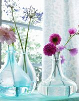 Dahlias, sweet peas and agapanthus in glass vases on a window sill