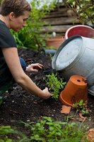A woman planting tomatoes