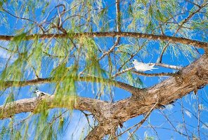 Blue sky above white bird in branches of tropical tree