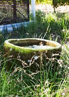 Mossy stone trough with water in tall grass with sliding shutters in background