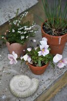 Potted plants on step