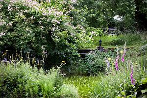 Wild summer garden