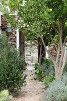 Mediterranean fruit trees lining garden path and view through open house doors of garden table beyond
