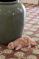 Cat lying in front of floor vase on tiled floor with Oriental pattern