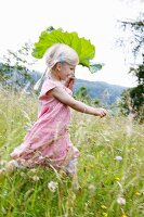 Little blond girl running with a rhubarb leaf through a field