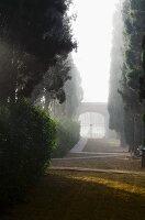 Misty atmosphere in grand garden