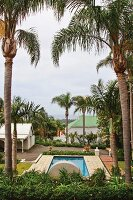 Large palm trees growing above a swimming pool