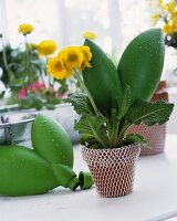 Flower pot with yellow flower and wrapped with netting and reservoir
