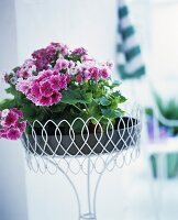 Geranium in a pot on a small, white metal, filigree table