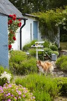 White-painted cottage with garden