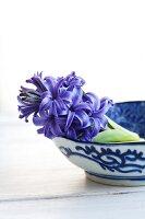 Bowl of cut hyacinths