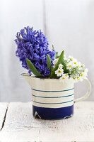 Hyacinth and German primroses in enamel jug
