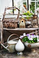 Basket, bird box, lantern, watering can and violas on old shelf in greenhouse