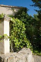 Gartenmauer vor Wohnhaus mit teilweise berankter Fassade
