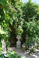 Mediterraner Garten mit blühenden Pflanzen