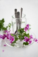 Cutlery in jar surrounded by scented pelargoniums