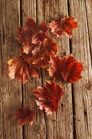 Autumnal maple leaves on wooden surface