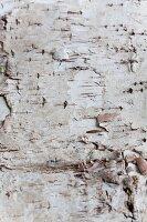 Tree bark (full image)